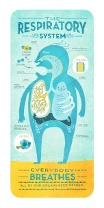 respiratory system by rachel ignotofsky