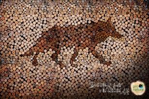 pro-natura-wolf-eagle-jaguar-print-366779-adeevee