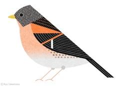 Birds-of-Tokyo-atori